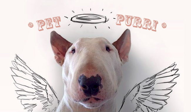 Pet-Purri with Sibylle Reisch with Sibylle Reisch on NOOSA FM