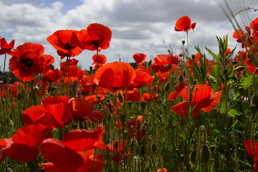 ANZAC Day Special Broadcast with Service Voices  on Radio Adelaide